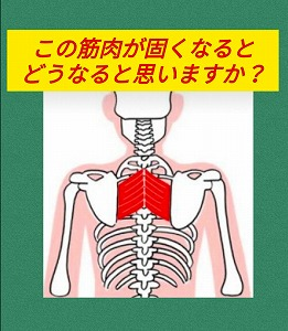 肩甲骨7・12.jpg